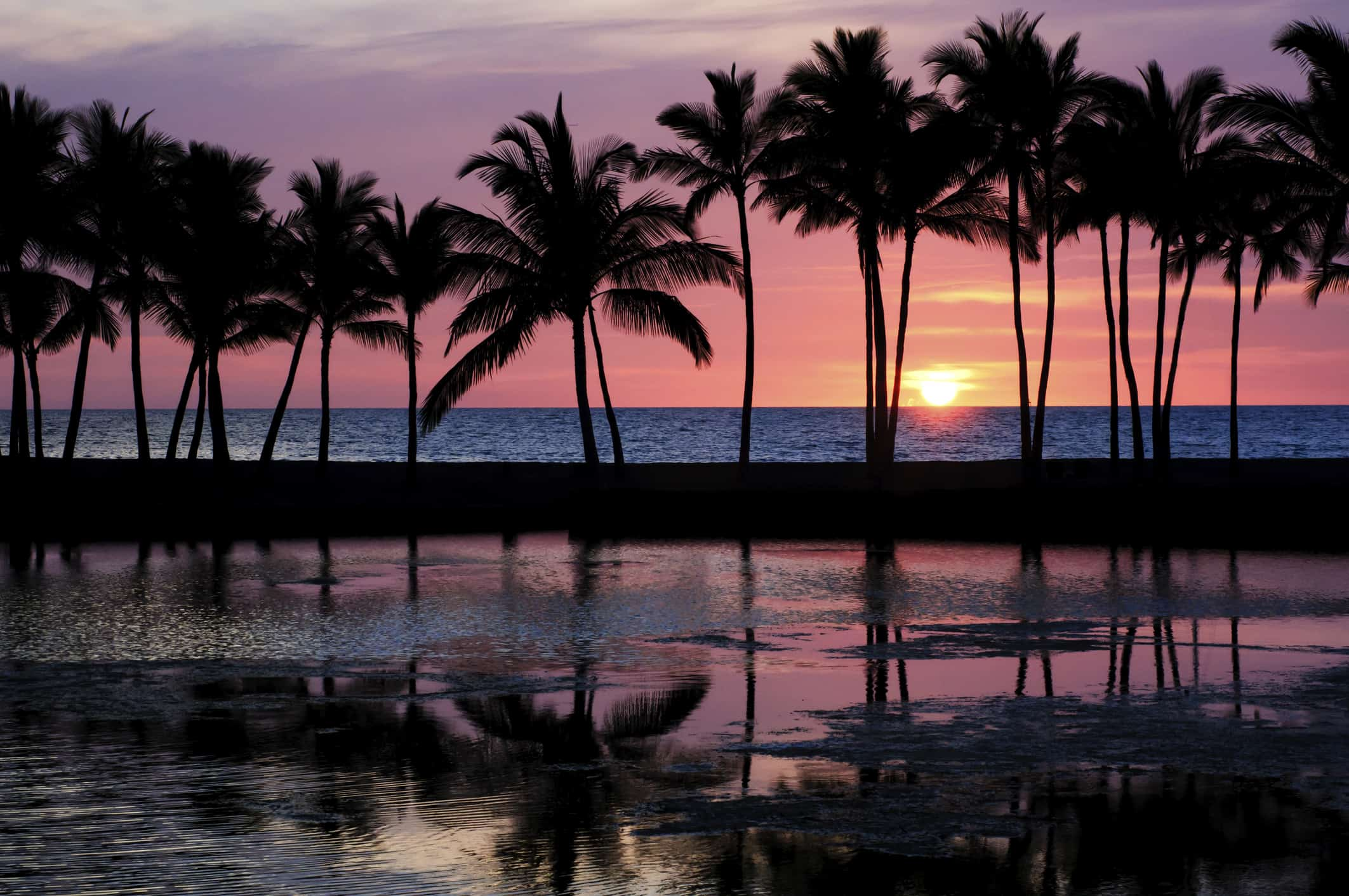 A row of palm trees in front of a sunset.
